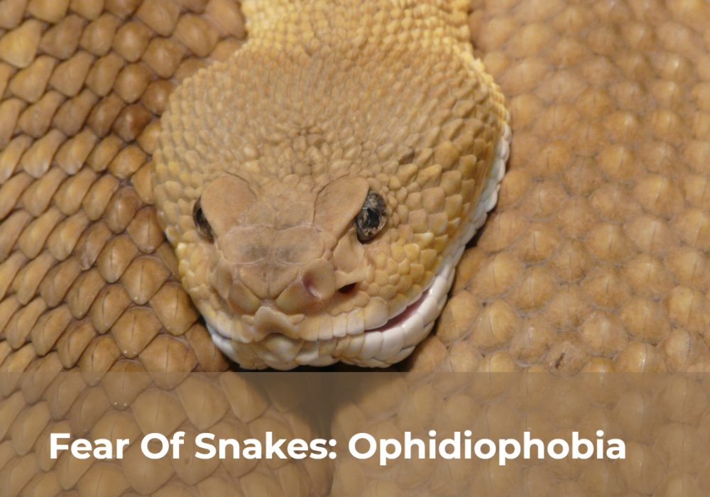 Fear Of Snakes: Ophidiophobia