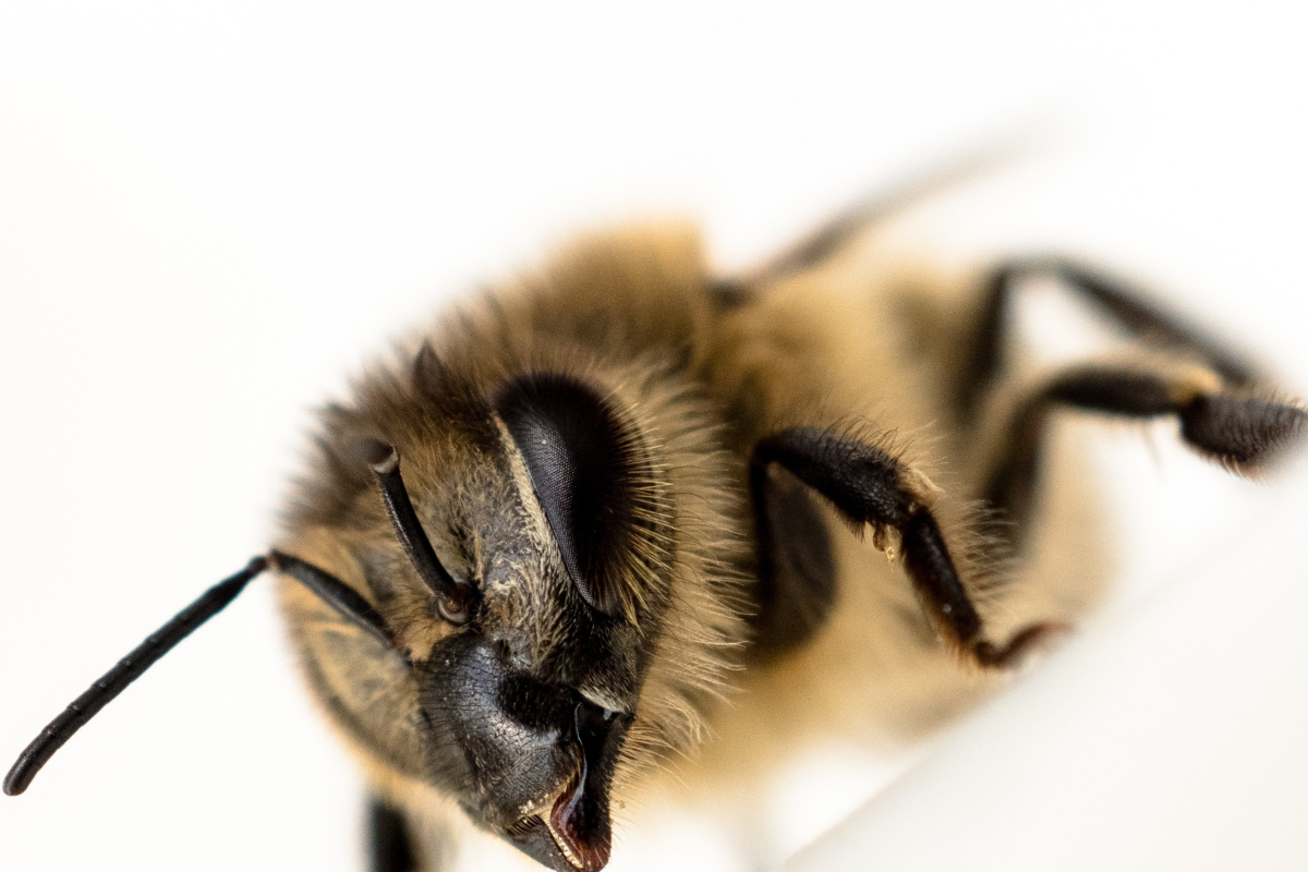 Fear of Bees Signs and Symptoms